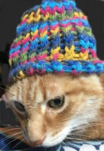 Make a hat for your cat with loom knitting!